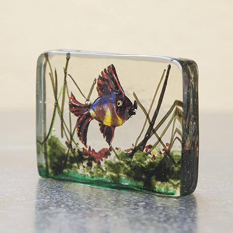 Barbini_aquarium_fish_sea_plants